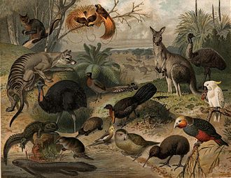 Fauna - Australian and New Zealand fauna. This image was likely first published in the first edition (1876–1899) of the Nordisk familjebok.