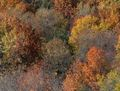 AutumnFoliage03.jpeg