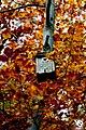 Autumn (5131879650).jpg