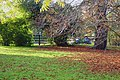 Autumn Leaves and Trees 01-11-2007 15-20-05 (1954564048).jpg