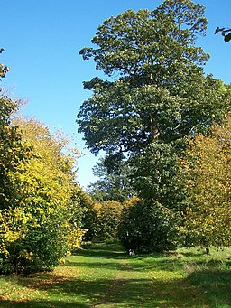 Autumn colour in Camer Country Park - geograph.org.uk - 994654