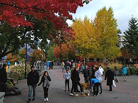 Autumn colours and plenty of dogs to pet (37560004544).jpg