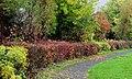 Autumn hedge, Lambeg - geograph.org.uk - 2131534.jpg
