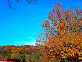Autumn in Cross Plains - panoramio (1).jpg