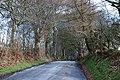 Avenue of birch trees near Penlan farm - geograph.org.uk - 1771810.jpg