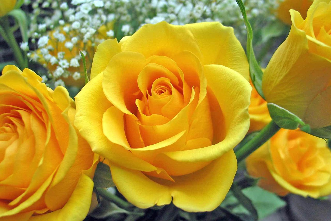 FileAwesome Yellow Rose