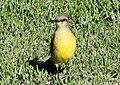 BIRD (7198152846).jpg