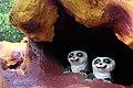 Baby pandas, Haw Par Villa (14607223789).jpg