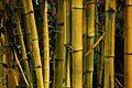 Bamboo (1466706101).jpg
