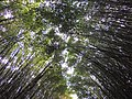 Bambuzais. - panoramio.jpg