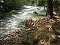 Banias thirsty tree.jpg