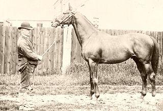 Barcaldine (horse) Irish-bred Thoroughbred racehorse