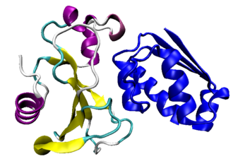 Protein complex - The Bacillus amyloliquefaciens ribonuclease barnase (colored) and its inhibitor barstar (blue) in a complex