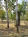 Beautiful Sightseeing in Nilagiri, Odisha 6.jpg