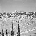 Bebouwing en begroeiing rondom Jeruzalem, Bestanddeelnr 255-2313.jpg