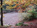 Bedburn Beck in autumn, Hamsterley Forest.jpg