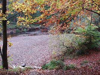 Лиственный лес осенью англия