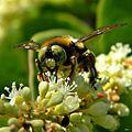 Bee's Eye View (14210813883).jpg