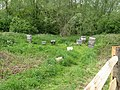 Bee hives north of Plumpton College - geograph.org.uk - 1315359.jpg