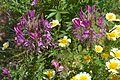 Bee plant.jpg