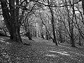 Beech woods, Knock of Crieff - geograph.org.uk - 256260.jpg