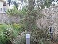 Beit Levi Eshkol (4).jpg