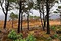 Ben Damph Estate, Torridon - geograph.org.uk - 612299.jpg