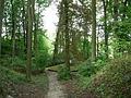 Bergpark Falkenegg 1.jpg