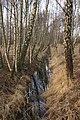 Birch-forest-Amager-Fælled1.jpg