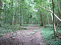 Birches Wood - geograph.org.uk - 189263.jpg