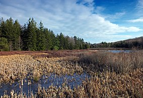 Black Moshannon State Park (Revisited) .jpg
