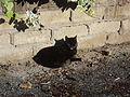 Black cat in Rome.JPG