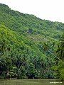Bohol, Loboc river cruise - panoramio.jpg