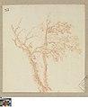 Boom, circa 1712 - circa 1799, Groeningemuseum, 0041445000.jpg