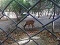 Borujerd Zoo 2.jpg