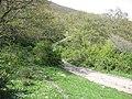 Boscopaduliacca.jpg