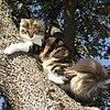 Bosque de noruega gatos.jpg