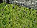 Botânico 9 - CGLS.jpg