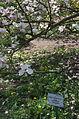BotGardenFomin DSC 0221-1.jpg