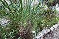 Botanic garden 13.jpg
