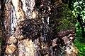 Botanic garden limbe84.jpg