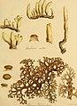 Botanical appendix (1823) (20392045222).jpg