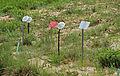 Botanischer Garten Ffm 02 (fcm).jpg