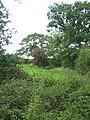 Boundary between Cheshire and Shropshire - geograph.org.uk - 238365.jpg