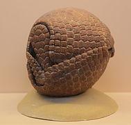 Tolypeutes tricinctus — Wikipédia