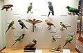 Bristo Museum - birds.jpg