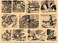 Brockhaus and Efron Encyclopedic Dictionary b18 818-3.jpg