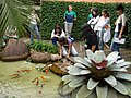 Bromelia aquarius - panoramio.jpg