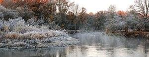 Bryansky Les Nature Reserve - Bryansk Forest