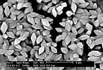 Bacillus thuringiensis - Spores and bipyramidal crystals of Bacillus thuringiensis morrisoni strain T08025